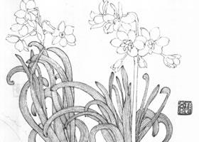 螃蟹水仙白描作品