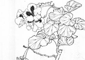 蝴蝶花白描作品