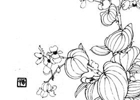 四季秋海棠白描作品
