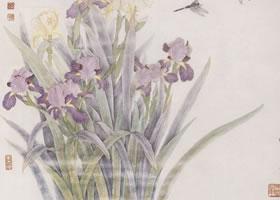鸢尾花的工笔画法步骤图示