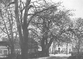 门采尔《树阴下的庄园》素描作品欣赏