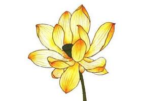 工笔画黄色荷花设色方法