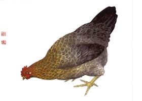 母鸡的工笔画法步骤图示