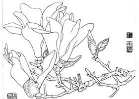 玉兰白描画法