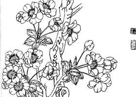 海棠白描画法