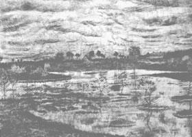 梵高《沼泽》经典景物素描