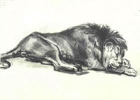 伦勃朗《睡觉的狮子》经典素描