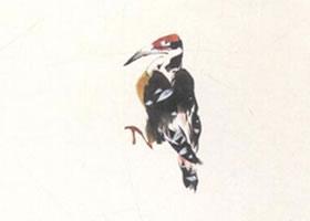 啄木鸟的写意画法