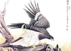 老鹰的工笔画法步骤