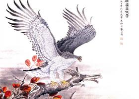 猛禽老鹰《苍鹰雄姿显傲骨》工笔画作品欣赏
