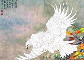 白鹰工笔画法步骤
