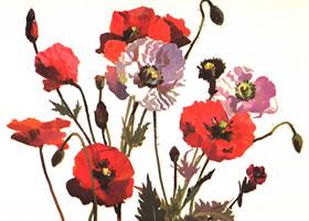 罂粟花水粉画法步骤