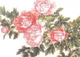 牡丹花工笔画的绘制步骤