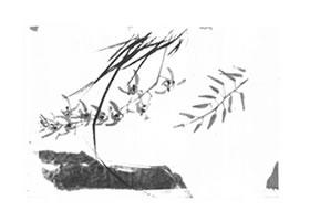 兰花的写意画法(三)