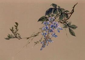 紫藤的工笔画法(三)