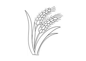 麦穗简笔画