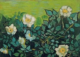 梵高《野玫瑰》面布油画欣赏